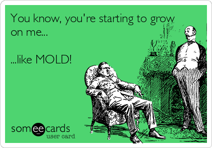 You know, you're starting to grow on me...  ...like MOLD!