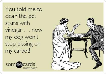 You told me to clean the pet stains with vinegar . . . now my dog won't stop pissing on my carpet!