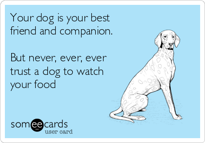 Your dog is your best friend and companion.   But never, ever, ever trust a dog to watch your food